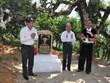 """Des théiers anciens shan tuyet d'Yen Bai reconnus """"arbres du patrimoine vietnamien"""""""