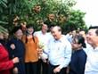 Une visioconférence pour promouvoir l'écoulement du litchi au pays et à l'étranger