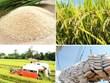 Le label «riz vietnamien» reconnu dans une vingtaine de marchés d'exportation