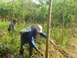 Quang Tri encourage la gestion durable des forêts en réponse au changement climatique