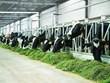 Les exportations de produits de l'élevage progressent de 44% en 5 mois