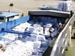 Dong Thap : les exportations rapportent plus d'un milliard de dollars