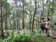 Le Vietnam recevra plus de 51 millions de dollars en réduisant les émissions