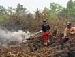 Indonésie : Fermeture forcée des écoles et aéroports à cause des incendies de forêt
