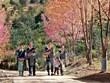 Les fleurs To Day égayent la zone montagneuse de Mu Cang Chai