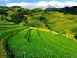 Mu Cang Chai: La beauté pittoresque du Nord-Ouest captive les touristes