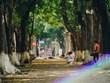 Rue des feuilles dorées, l'une des spécialités d'automne les plus connues de Hanoï