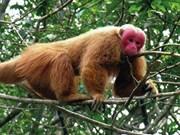 Quang Binh reçoit un macaque à face rouge