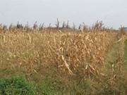 La sécheresse perdure, les dégâts s'alourdissent