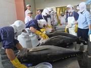 Le Vietnam va mieux gérer la pêche du thon