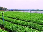 Vingroup : le premier lot de légumes bio mis en vente