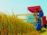 Directive du PM sur le projet de restructuration agricole