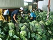 Can Tho et les Pays-Bas coopèrent pour réduire les pertes après récolte