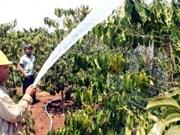 Plus de 4.000 milliards de dôngs pour le développement durable du café à Lâm Dông
