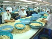 Hausse de 18% des exportations vietnamiennes de noix de cajou