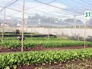 Une ferme de légumes aux normes de l'agriculture bio européennes et américaines