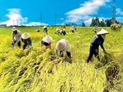 TPP : le delta du Mékong accélère sa restructuration agricole