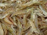 Les Allemands friands des crevettes à pattes blanches du Vietnam