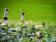 Vietnam - Pays-Bas : coopération entre Dông Tháp et Emmen