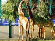 Inauguration du Parc Vinpearl Safari Phu Quoc