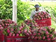 Bond des exportations nationales de fruits et légumes en 2015