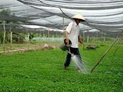 Le fonds d'assistance aux agriculteurs de HCM-Ville en action