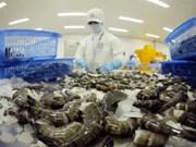 Prévisions optimistes pour l'exportation des crevettes en 2016
