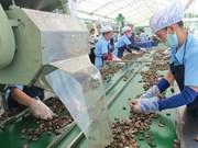 Exportation de noix de cajou : le Vietnam conserve son trône sur le marché mondial