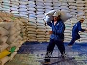 Myanmar : chute des exportations de riz
