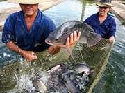 Le Vietnam participera à un projet aquacole financé par la FAO