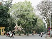 """Les """"sua"""", partie intégrante de la beauté gracieuse de Hanoi"""