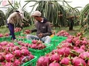 Bond des exportations nationales de fruits et légumes au 1er trimestre