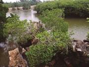 Un végétal hybride rarissime à Huê