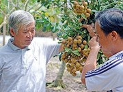 Dông Thap: Une fruiticulture fructueuse