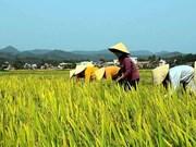 Aide aux paysans dans la production rizicole bio aux normes internationales