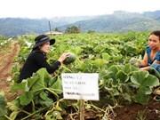 Coopération vietnamo-australienne dans l'agriculture high-tech à Kon Tum