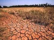 Changements climatiques : le delta du Mékong souhaite recevoir le soutien d'Israël
