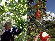 Comparaison entre la récolte des fruits au Vietnam et celle dans le monde