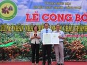 Longane Châu Thành - Dông Thap : une nouvelle appellation d'origine