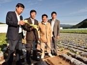 Agriculture : le village japonais Kawakami veut coopérer avec le Vietnam