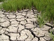 Promouvoir la coopération internationale dans la gestion et l'exploitation des eaux souterraines