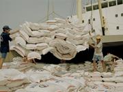 Exportation de 2,93 millions de tonnes de riz en sept mois