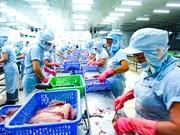 Le tilapia vietnamien s'exporte à un bon prix aux Etats-Unis