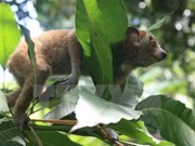 Six loris sauvés des trafiquants d'animaux sauvages
