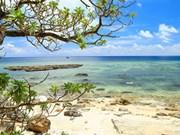 Bienvenue à l'île de Ly Son, le royaume de l'ail