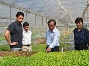Le Japon investit dans un projet de culture de légumes bio à Binh Dinh
