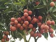 Bac Giang : bientôt la Fête des fruits de Luc Ngan