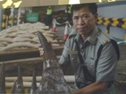 "Lancement de la campagne ""Interdiction de l'usage des cornes de rhinocéros"""