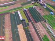 Restructuration agricole exemplaire dans le district de Chuong My (Hanoï)