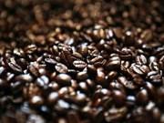 Bond des exportations nationales de café en Algérie depuis janvier